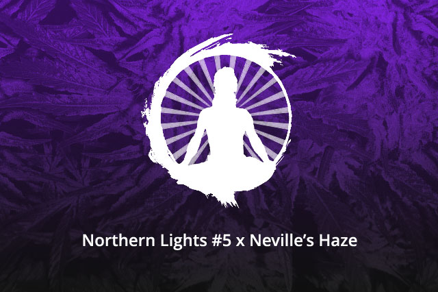 Northern Lights #5 x Neville's Haze