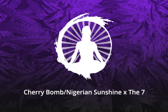 Cherry Bomb/Nigerian Sunshine x The 7