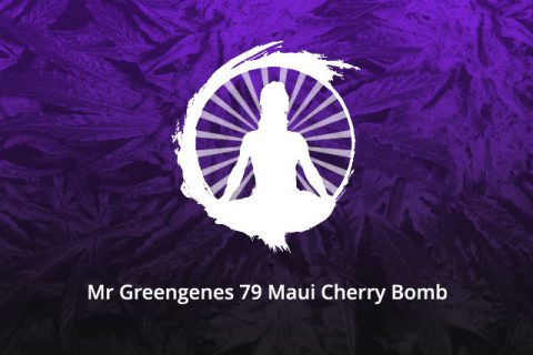 Mr Greengenes 79 Maui Cherry Bomb